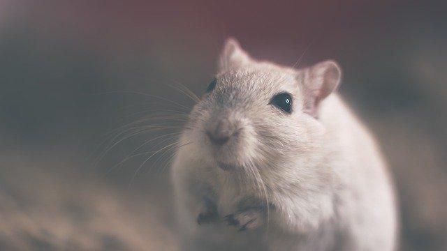 Мышь в пакете молока нашли жители Ялты